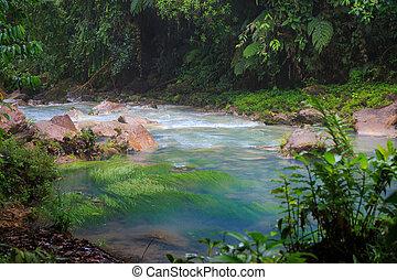río, celeste, exuberante, rainforest