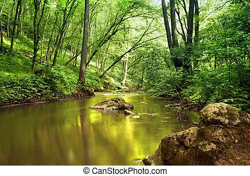 río, en, bosque