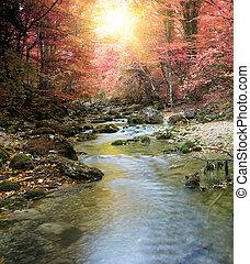 río, en, bosque de otoño