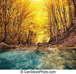 río, en, montaña, forest.