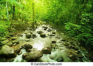 río, en, selva