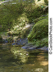 río, entre, rainforest