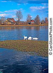 río, gansos