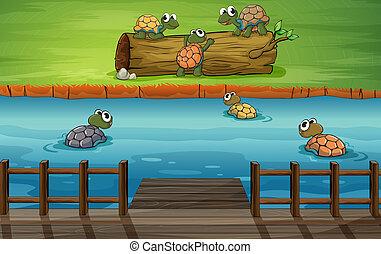 río, grupo, tortugas