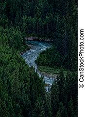 río sinuoso, por, árboles de pino