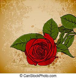 róża, czerwony, rocznik wina