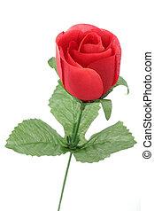 róża, czerwony