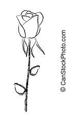 róża, ilustracja