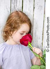 róża, pachnący