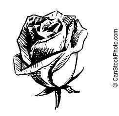 róża, rys, pączek, ilustracja