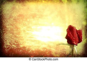 róża, stary, tło, czerwony