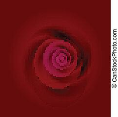 róża, tło, ślub