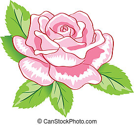 róża, wektor