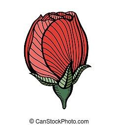 róża, wektor, rysunek