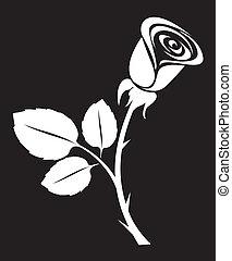 róża, wektor, sztuka, ilustracja