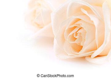 róże, beżowe tło