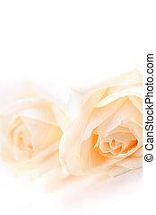 róże, beżowy