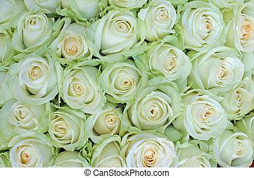 róże, biały