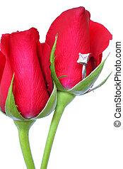 róże, i, ring