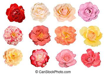 róże, kwiaty