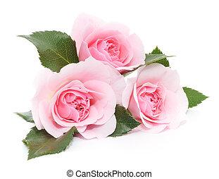 róże, różowy