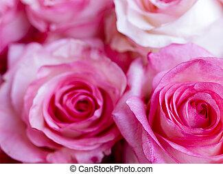 róże, tło, różowy