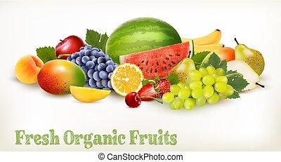 różny, cielna, fruit., zbiór, vector., świeży