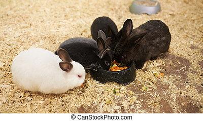 różny, jedzenie, dookoła, jadło, dozownik, króliki, grupa