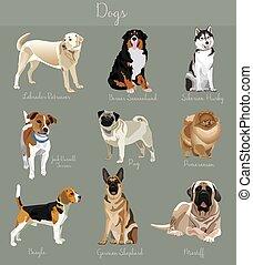 różny, komplet, zwierzęta, isolated., cielna, mały, typ, psy