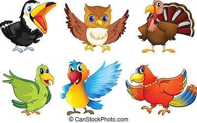 różny, rodzaje, ptaszki
