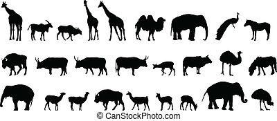różny, sylwetka, zwierzęta