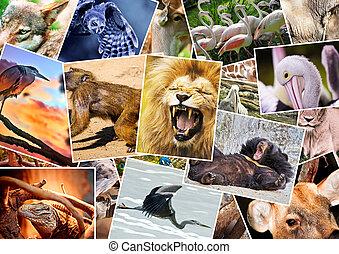 różny, zwierzęta, collage