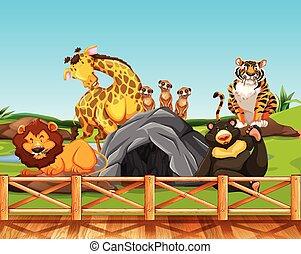 różny, zwierzęta, ogród zoologiczny