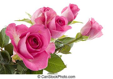 różowe róże, kwiaty