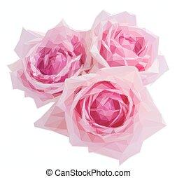 różowe róże, trzy, rozkwiecony