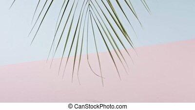 różowy, błękitny, huśta się, pełny, powolny, zielony, gładki, cienie, drzewo, tropikalny, tło., video, duotone, dłoń, 240fps, gałąź, branch., powoli, hd, ruch