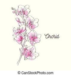różowy, białe tło, ilustracja, storczyk