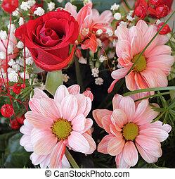 różowy, bukiet, margerytki, czerwony podniosłem się