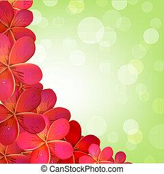 różowy, frangipani, ułożyć, bokeh