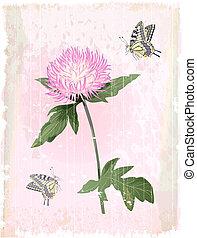 różowy kwiat, aster