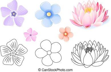 różowy kwiat, próbka, lotos, komplet, niezapominajka,...