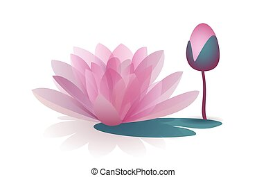 różowy kwiat, waterlily, odizolowany, tło, biały