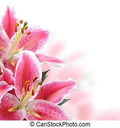 różowy, lilie