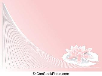 różowy, lotos