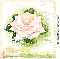 różowy, rocznik wina, ilustracja, róża