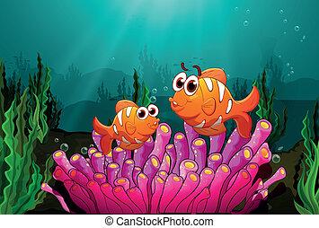 różowy, ryby, koral, dwa, nad