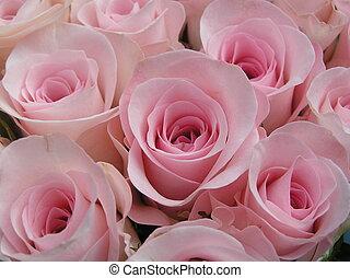 różowy, słodki, róże