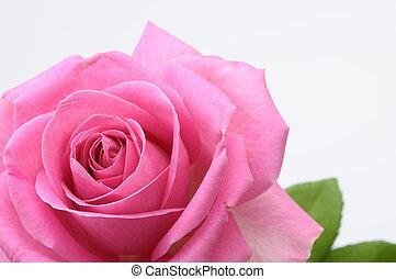 różowy, serce, do góry szczelnie, róża
