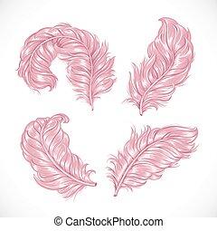 różowy, soczysty, puszysty, pierze, odizolowany, struś, ...