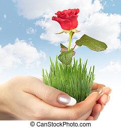 rózsa, fű